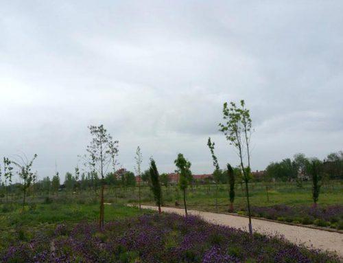 Alcalá de Henares disfruta de una nueva zona verde: el Parque Camarmilla